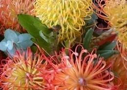 Colorful Protea Pin Cushions