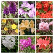 A collection of Nine flowers Kenny and Kilohana saw during their trip to Scotland